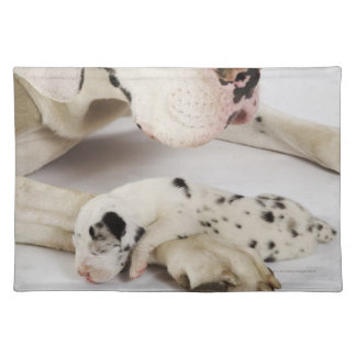 Harlequin Great Dane puppy sleeping on mother Place Mats