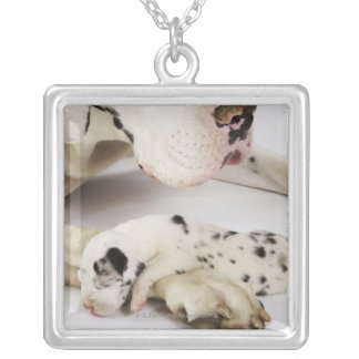 Harlequin Great Dane puppy sleeping on mother Silver Plated Necklace