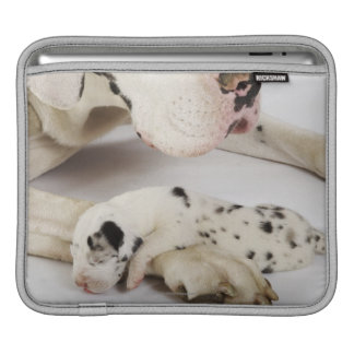 Harlequin Great Dane puppy sleeping on mother Sleeves For iPads
