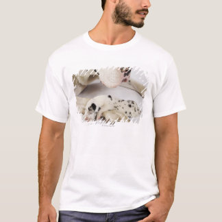 Harlequin Great Dane puppy sleeping on mother T-Shirt