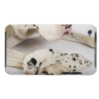 Harlequin Great Dane puppy sleeping on mother's iPod Touch Cases