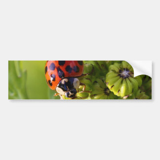 Harlequin Lady Bug Beetle Harmonia Axyridis Bumper Sticker
