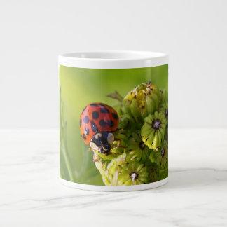 Harlequin Lady Bug Beetle Harmonia Axyridis Jumbo Mug