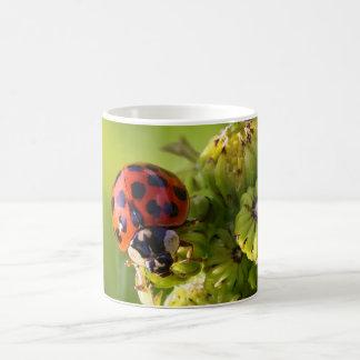 Harlequin Lady Bug Beetle Harmonia Axyridis Classic White Coffee Mug