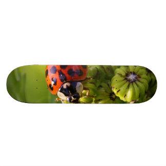 Harlequin Lady Bug Beetle Harmonia Axyridis Skate Board Deck