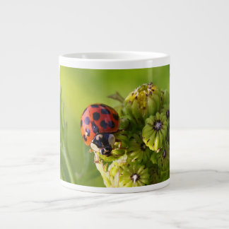 Harlequin Lady Bug Beetle Harmonia Axyridis Extra Large Mug
