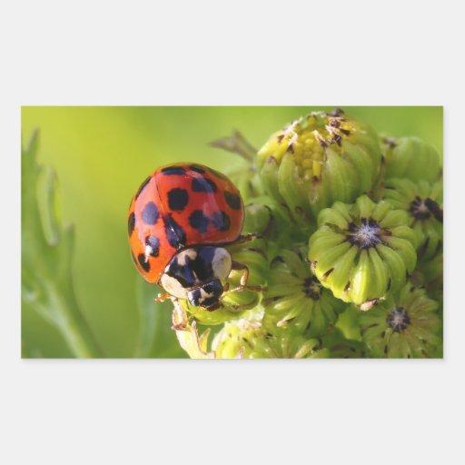 Harlequin Lady Bug Beetle Harmonia Axyridis Sticker