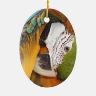 Harlequin macaw christmas ornament