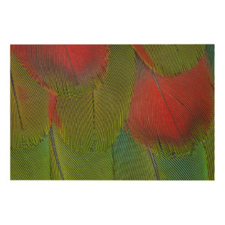 Harlequin Macaw Feather Abstract Wood Print