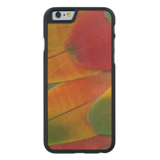Harlequin Macaw parrot feathers Carved® Maple iPhone 6 Case