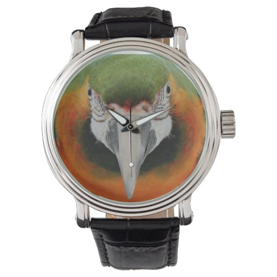 Harlequin macaw watch