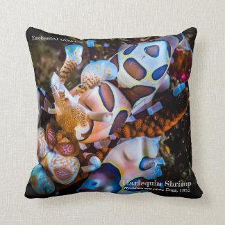 Harlequin Shrimp, Hymenocera picta, Cushion