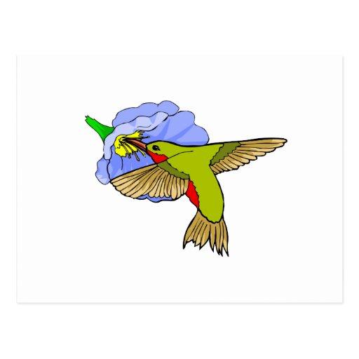 Harmon Hummingbird Post Card