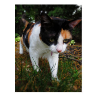 Harmony, my calico cat postcard