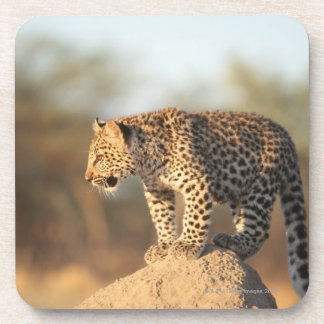 Harnas Wildlife Sanctuary, Namibia Coaster