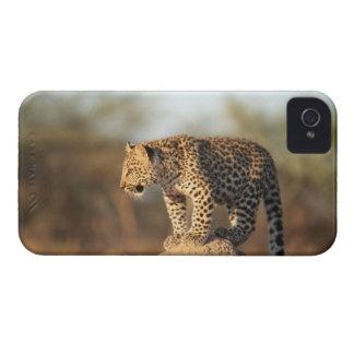 Harnas Wildlife Sanctuary, Namibia iPhone 4 Case-Mate Case
