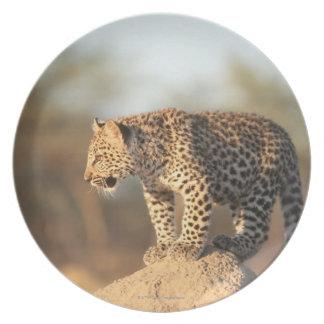 Harnas Wildlife Sanctuary, Namibia Plate
