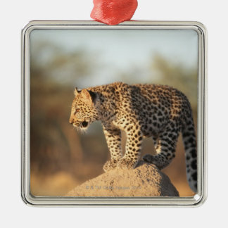Harnas Wildlife Sanctuary, Namibia Silver-Colored Square Decoration