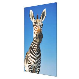 Harnas Wildlife Sanctuary, Namibia, Southern Canvas Print