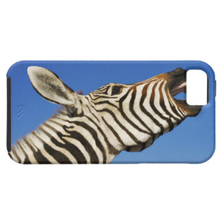 Harnas Wildlife Sanctuary, Namibia, Southern iPhone 5 Covers