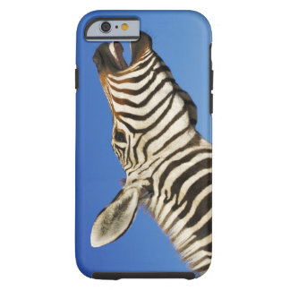 Harnas Wildlife Sanctuary, Namibia, Southern Tough iPhone 6 Case