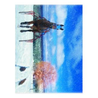 Harness Racing Horse Holiday Card Postcard