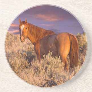 Harney County Wild horse stands alert Coaster