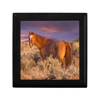 Harney County Wild horse stands alert Gift Box