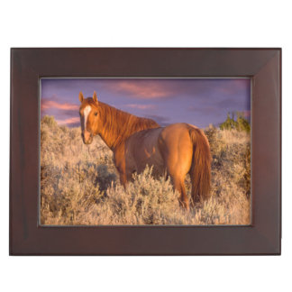 Harney County Wild horse stands alert Keepsake Box