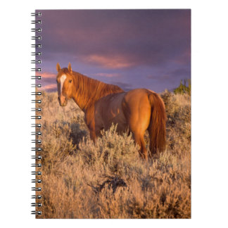 Harney County Wild horse stands alert Notebook