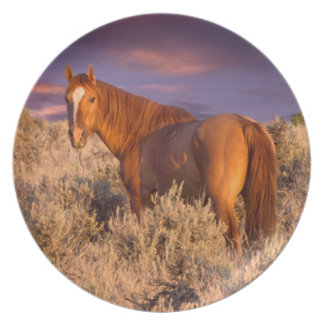 Harney County Wild horse stands alert Plate
