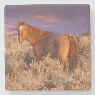 Harney County Wild horse stands alert Stone Beverage Coaster