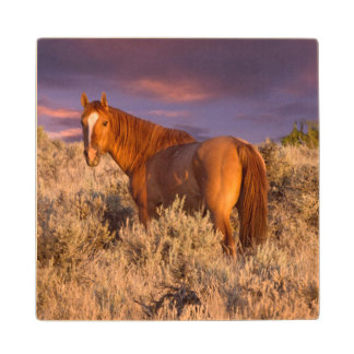 Harney County Wild horse stands alert Wood Coaster