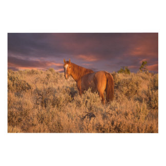 Harney County Wild horse stands alert Wood Wall Art