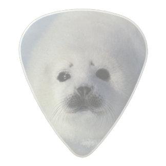 Harp seal Phoca groenlandica) A week-old harp Acetal Guitar Pick