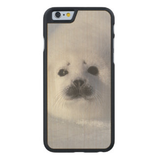 Harp seal Phoca groenlandica) A week-old harp Carved® Maple iPhone 6 Slim Case