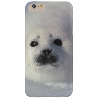 Harp seal Phoca groenlandica) A week-old harp Barely There iPhone 6 Plus Case