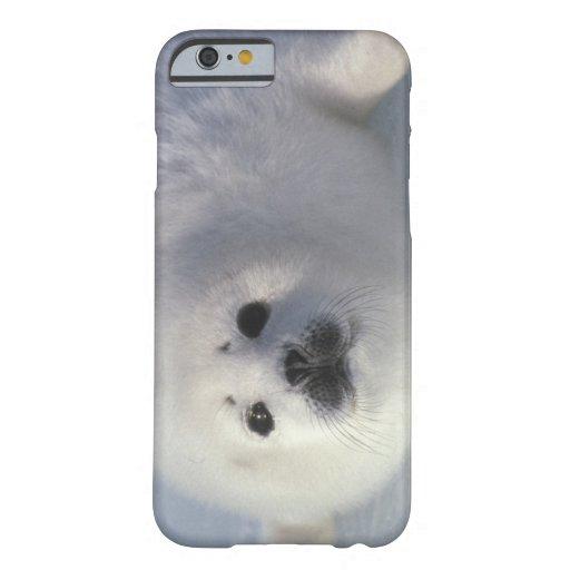 Harp seal Phoca groenlandica) A week-old harp iPhone 6 Case