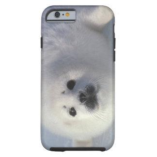 Harp seal Phoca groenlandica) A week-old harp Tough iPhone 6 Case