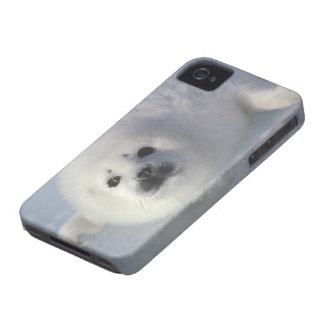 Harp seal Phoca groenlandica) A week-old harp Case-Mate iPhone 4 Cases