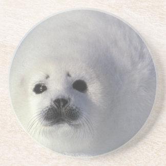Harp seal Phoca groenlandica) A week-old harp Drink Coaster