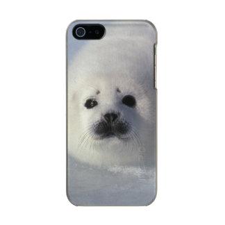 Harp seal Phoca groenlandica) A week-old harp Incipio Feather® Shine iPhone 5 Case