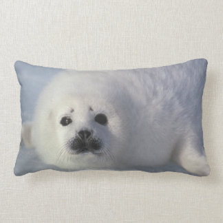 Harp seal Phoca groenlandica) A week-old harp Lumbar Cushion
