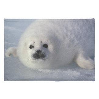 Harp seal Phoca groenlandica) A week-old harp Placemat