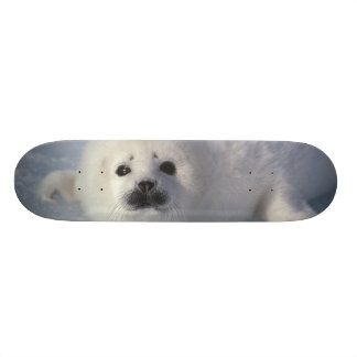 Harp seal Phoca groenlandica) A week-old harp Skate Board Deck