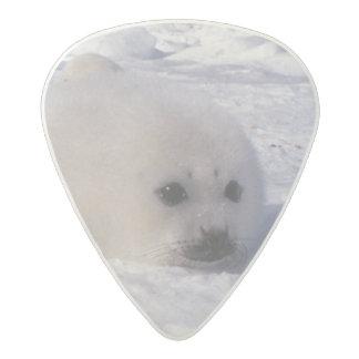 Harp seal (Phoca groenlandica) Harp seal pups Acetal Guitar Pick
