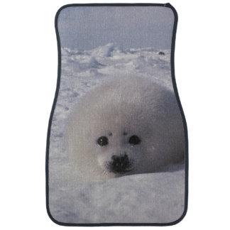 Harp seal (Phoca groenlandica) Harp seal pups Car Mat