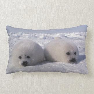 Harp seal (Phoca groenlandica) Harp seal pups Cushions