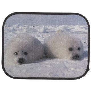 Harp seal (Phoca groenlandica) Harp seal pups Floor Mat