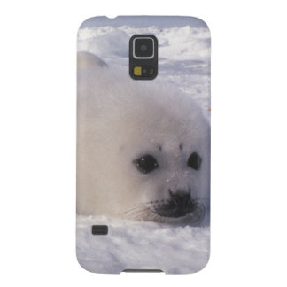 Harp seal (Phoca groenlandica) Harp seal pups Galaxy S5 Cover